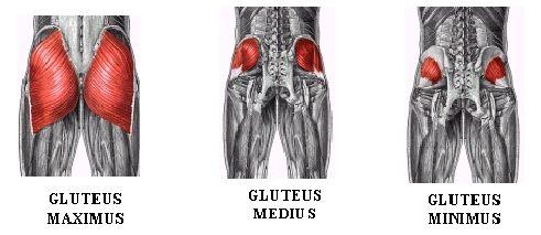 Back to Basics: Are We Activating Our Glutes Properly ...
